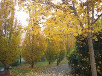 autunno a Santa Caterina